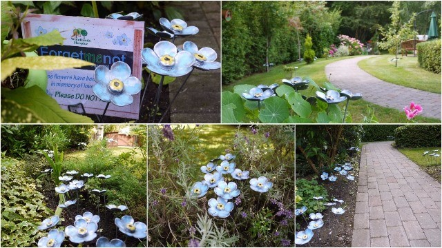 Forget Me Not Display August