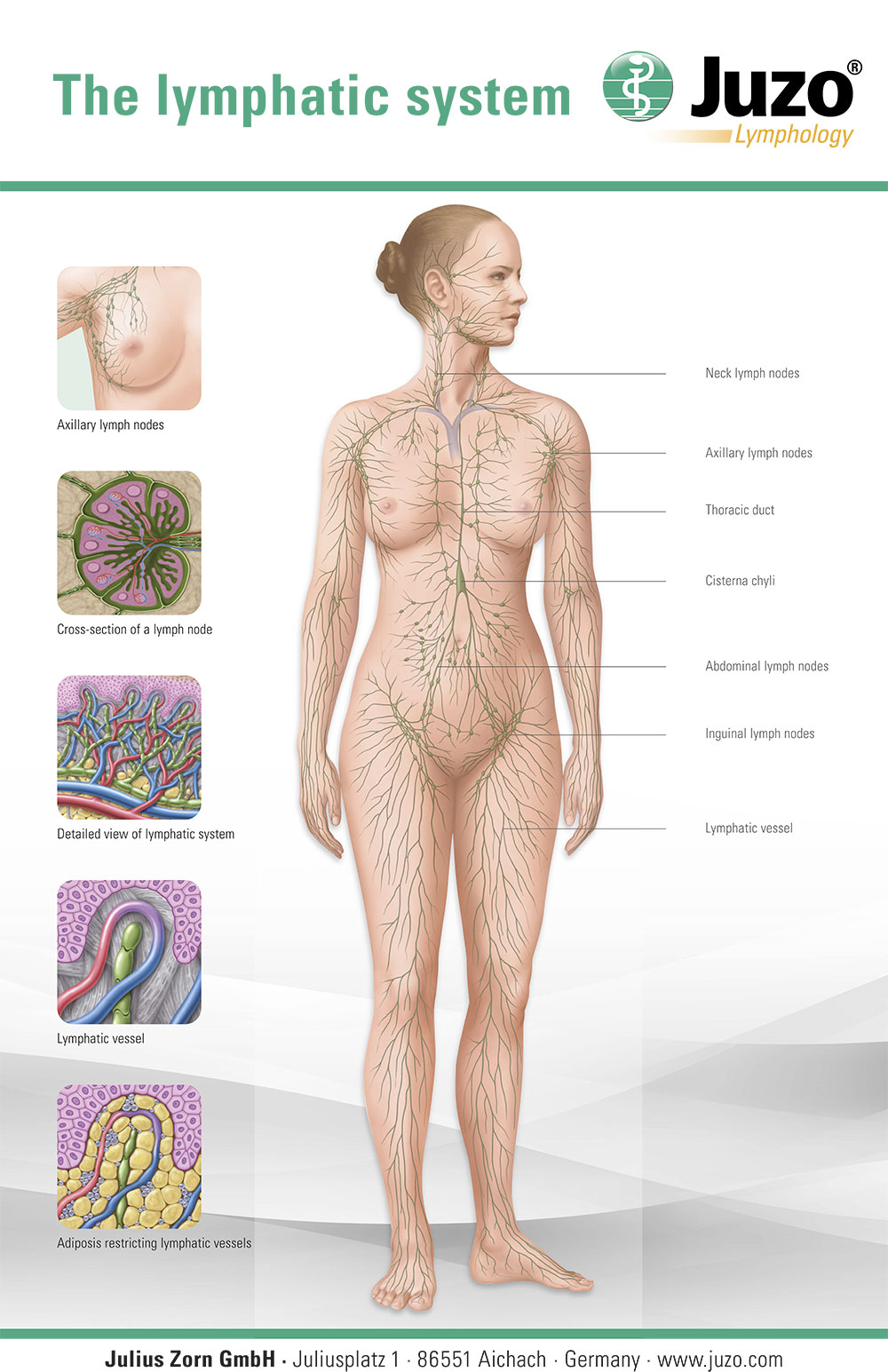 The Lymphatic system image. Source: Juzo